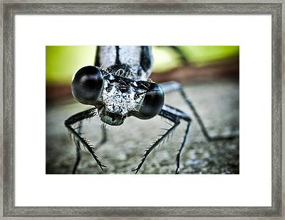 Damselfly In Late Summer Framed Print by Ryan Kelly