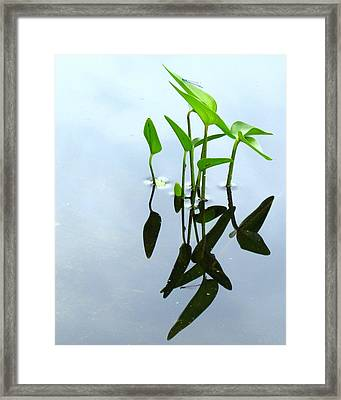 Damselfly In The Mirror Framed Print
