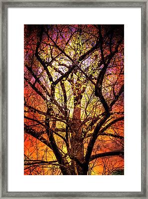 Dance In The Fire Framed Print