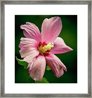 Dance Framed Print by Michael Putnam