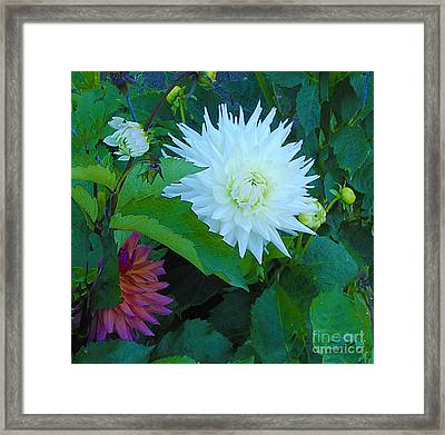 Dance Of Life Framed Print