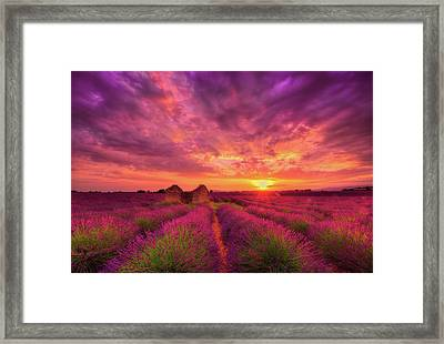 Dance Of Passion Framed Print by Midori Chan