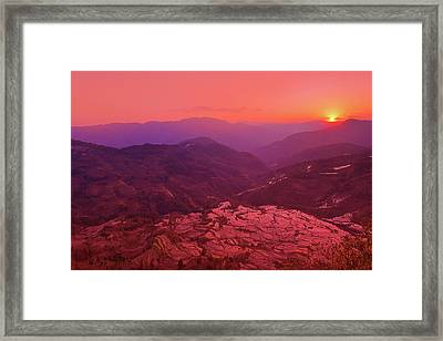 Dance Of Pink Framed Print by Midori Chan