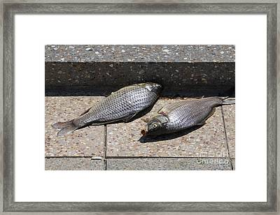 Framed Print featuring the photograph Dance Of The Dead Fish by Stephen Mitchell