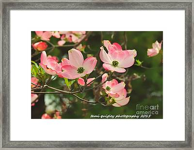 Dance Of The Dogwood Framed Print