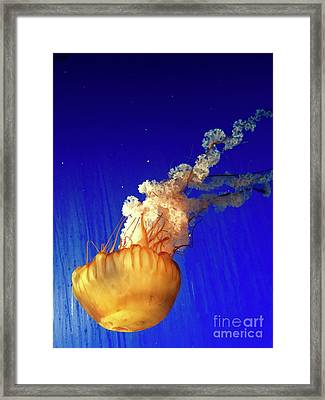 Dance Of The Jelly Framed Print by Beth Saffer