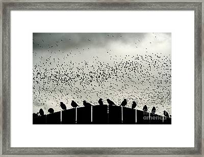 Dance Of The Migration Framed Print by Jan Piller