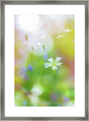 Dance Of The Nature Spirits Framed Print