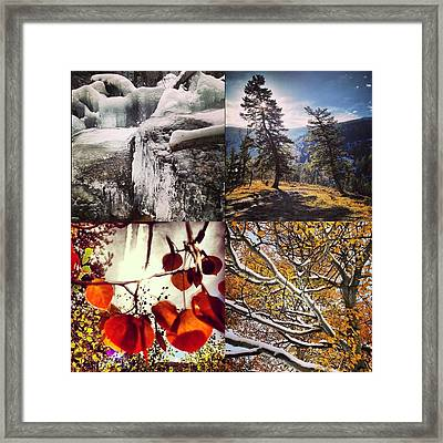 Dance Of The Trees Framed Print by Bob Berwyn
