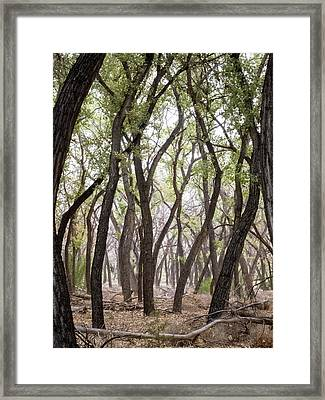 Dance Of The Trees Framed Print