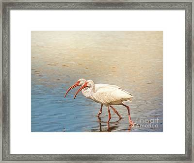 Dance Of The White Ibis Framed Print