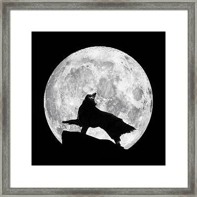 Dances With The Moon Framed Print by Wolf Shadow  Photography