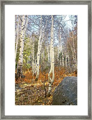 Framed Print featuring the painting Dancing Aspens by Larry Darnell