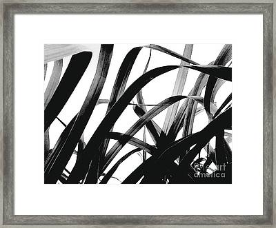 Framed Print featuring the photograph Dancing Bamboo Black And White by Rebecca Harman