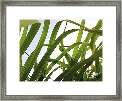 Framed Print featuring the photograph Dancing Bamboo by Rebecca Harman