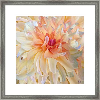 Dancing Dahlia Framed Print