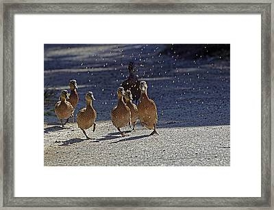 Dancing Duckies Framed Print