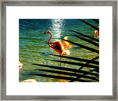 Dancing Flamingo Framed Print