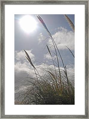 Dancing Grass Framed Print by Jean Booth