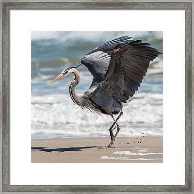 Dancing Heron #2/3 Framed Print by Patti Deters