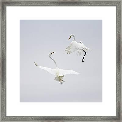 Dancing In The Air Framed Print by Karen Wang