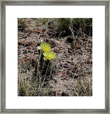 Dancing In The Desert Framed Print