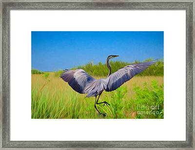 Dancing In The Glades Framed Print
