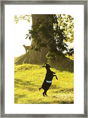 Dancing In The Rain Framed Print by Thomas R Fletcher