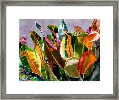 Dancing In The Sunlight Framed Print by Cory Clifford
