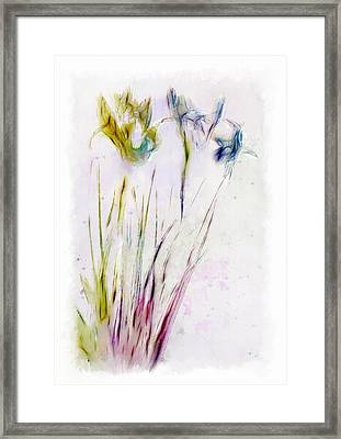Dancing Irises Framed Print by Jill Balsam