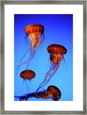 Dancing Jellyfish Framed Print