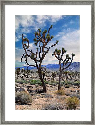 Dancing Joshua's - Joshua Tree National Park Framed Print by Glenn McCarthy