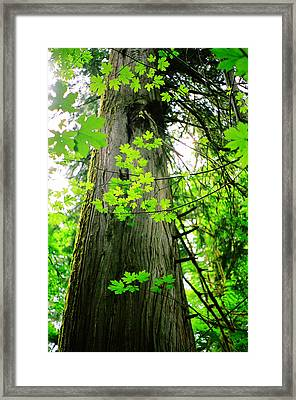 Framed Print featuring the photograph Dancing Leaves by Kathy Bassett