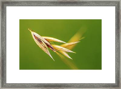 Dancing Oats Framed Print by Mah FineArt