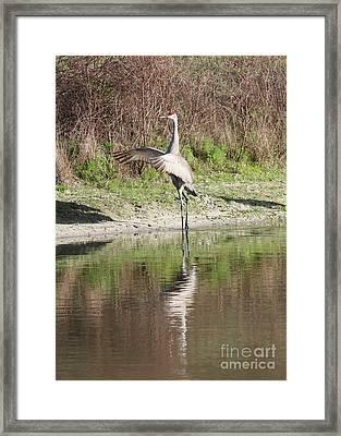 Dancing On The Pond Framed Print by Carol Groenen