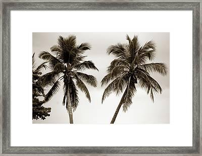 Dancing Palms Framed Print by Susanne Van Hulst