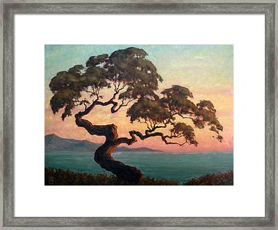 Dancing Pine Framed Print by Michael Orwick