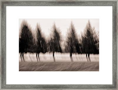 Dancing Pines Framed Print by Carol Leigh