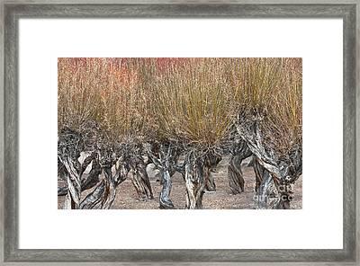 Dancing Trees Framed Print