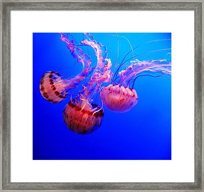 Dancing Trio Framed Print