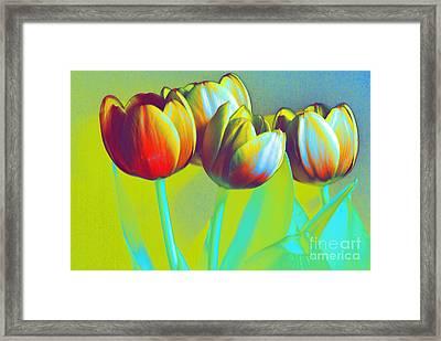 Dancing Tulips Framed Print by Karen Lewis