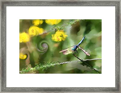 Dancing With Daiseys Framed Print