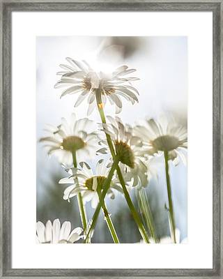 Dancing With Daisies Framed Print