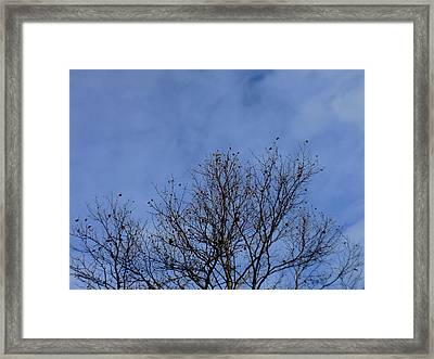 Dancing With The Clouds 2 Framed Print by Trilby Cole