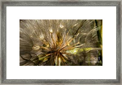 Dandelion 2 Framed Print