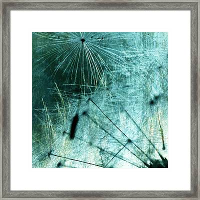 Dandelion Art 8 Framed Print by Falko Follert