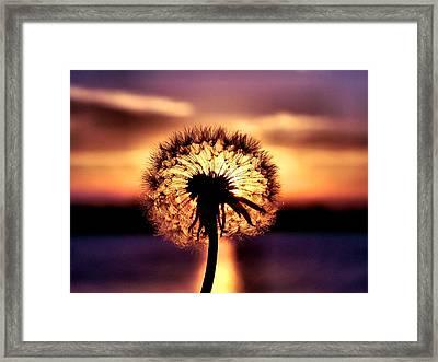 Dandelion At Sundown Framed Print