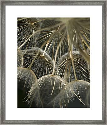 Dandelion Bouquet Framed Print by Iris Greenwell
