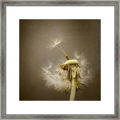 Dandelion Clock Framed Print by Ian Barber