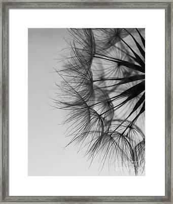 Dandelion Close Up Framed Print by Jan Bickerton